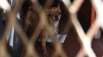 En el interior de una vivienda de avenida del Rosario al 2000 la Municipalidad y la policía encontraron la semana pasada 199 perros, muchos de ellos dentro de pequeñas jaulas.