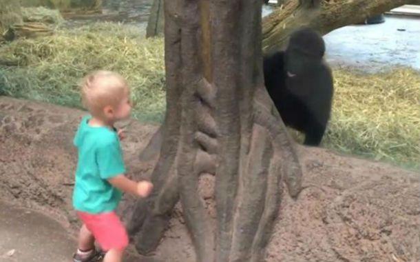 El niño juega con el gorila en el zoológico de Columbus.