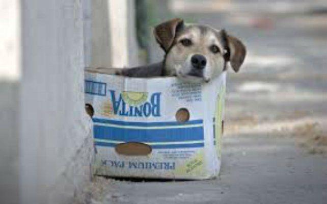 Proponen que se les hagan descuentos en la TGI a los que adopten perros callejeros