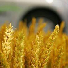 La ONU advierte que los biocombustibles son un crimen contra la humanidad