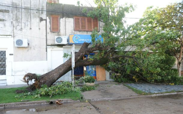 Gran cantidad de arboles cayeron en medio de la tormenta generando cuantiosos destrozos edilicios.
