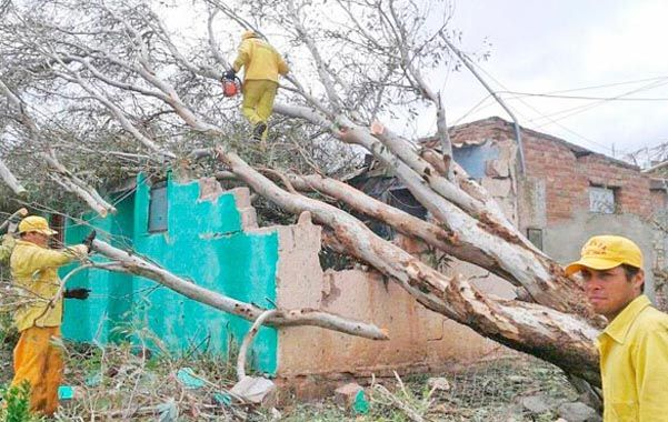 Un árbol cayó sobre una casa.