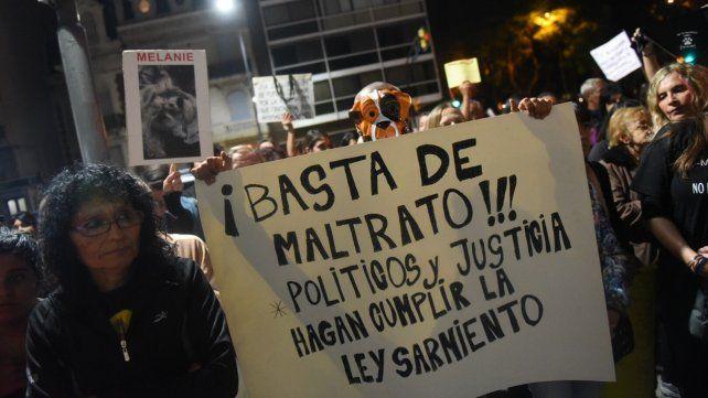 Reforma. La ley 14.346 (llamada ley Sarmiento) pena el maltrato animal. Hay once proyectos en Diputados para endurecer las condenas.