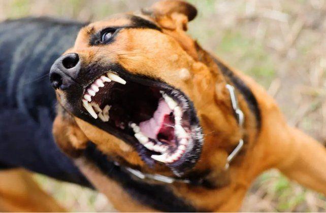 Una docente murió tras ser atacada por sus dos perros