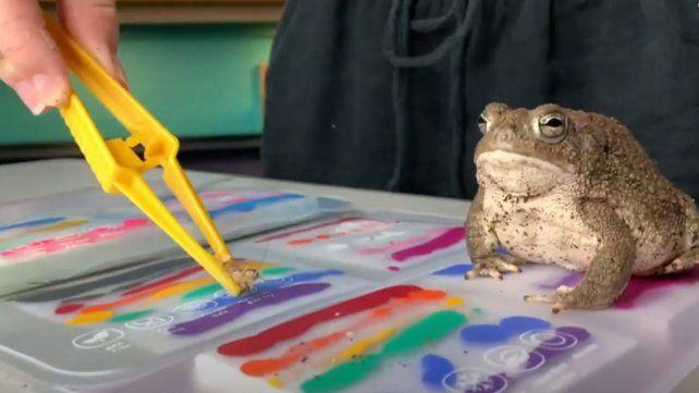 Una de las ranas de Madison en plena tarea creativa.
