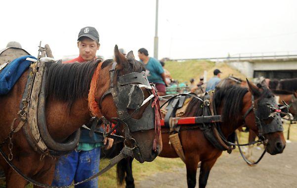 Vence el plazo y por ahora pocos carreros aceptaron entregar sus caballos