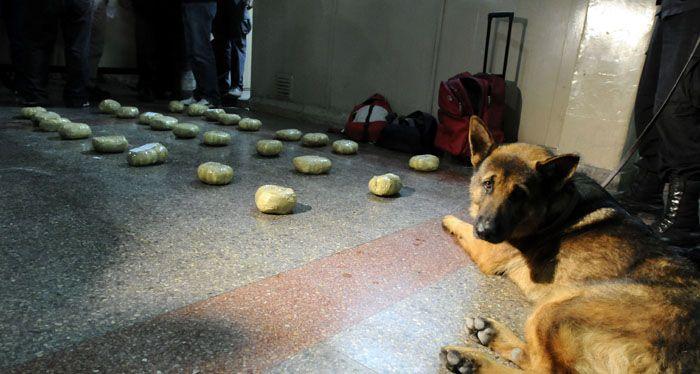 Transportaba más de 25 kilos de cocaína y un perro adiestrado lo detectó en la terminal