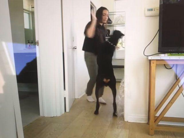 Una famosa youtuber fue grabada golpeando a su perro