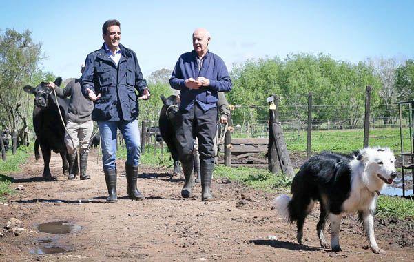 Entre las vacas. Massa y Lavagna visitaron un establecimiento ganadero.