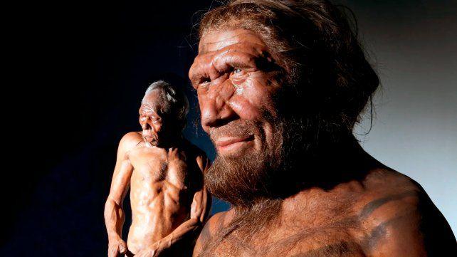 UnHomo Sapiens y un Neandertal en el Museo de Historia Natural de Londres (nhmimages.com)