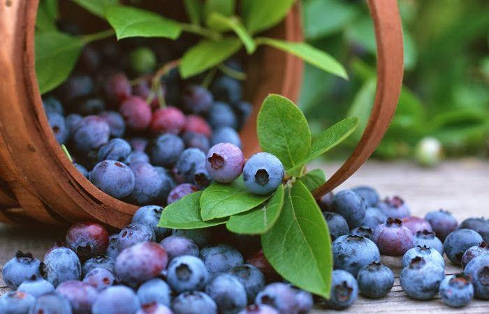 El vino, los cítricos y los arándanos ayudan a reducir el riesgo de impotencia
