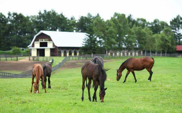 El monto de los equinos robados alcanzaría los 100 mil pesos. (Foto archivo)