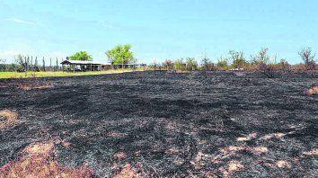 """La causa. Los incendios se usan para """"limpiar"""" de vegetación el terreno y luego sembrar cultivos extensivos como la soja o pastura para el ganado."""