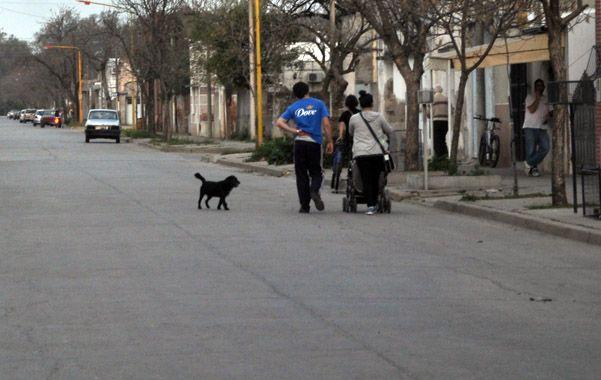 Preocupación. En la zona donde hallaron la mayor cantidad mascotas muertas.