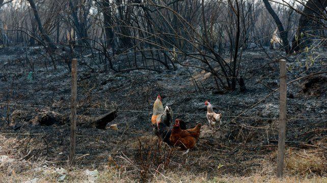 Imágenes del ecocidio en las islas frente a Rosario