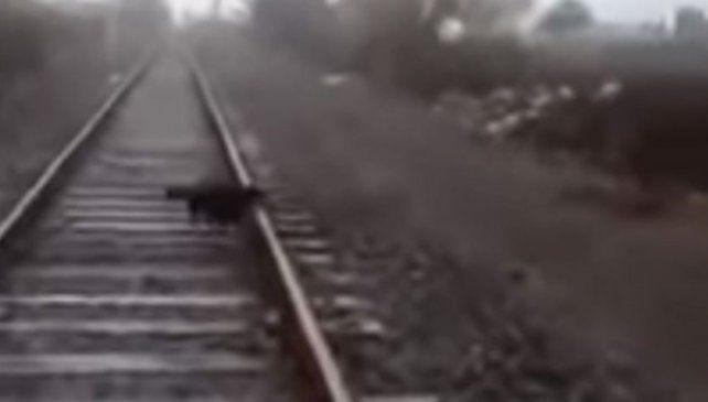 Un maquinista detuvo el tren para liberar un perro atado a la vía