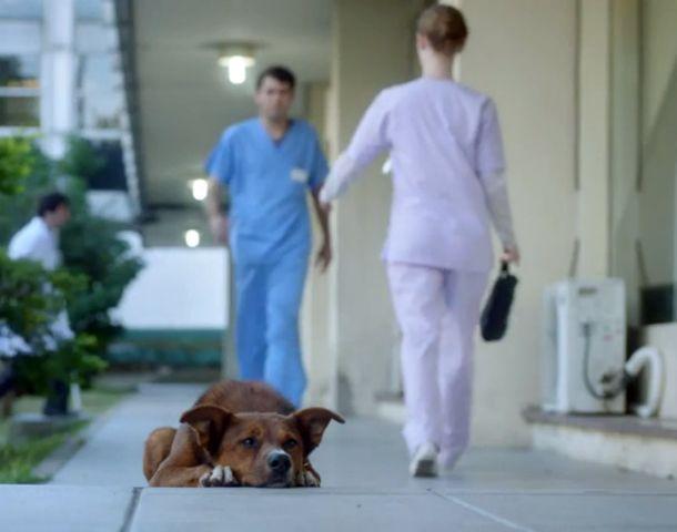 El hombre y el perro es el título del spot.