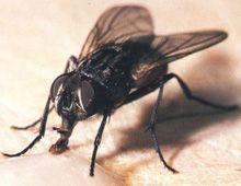 Una investigación científica revela por qué es tan difícil matar una mosca