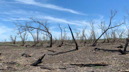 Los incendios en la zona de islas del Paraná provocaron daños irreparables en el humedal.