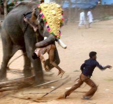 Un elefante entró a un templo hindú y mató a tres personas