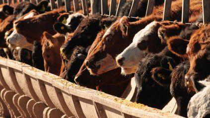 Los créditos se enmarcan en el Plan Ganadero Nacional que busca mejorar la productividad de la ganadería argentina.