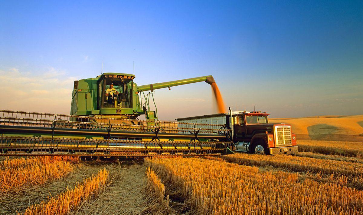 El sector agropecuario congela la venta de divisas a la espera de devaluación