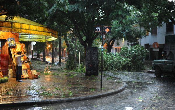 La plata. La tormenta de viento tiró árboles en la provincia de Buenos Aires.