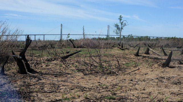 Gran parte de las 900 hectáreas de la Isla de los Mástiles sufrió los embates del fuego durante la temporada de quemas de 2020.