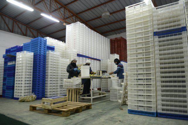 Una fábrica de congelados, parada por la falta de frutillas