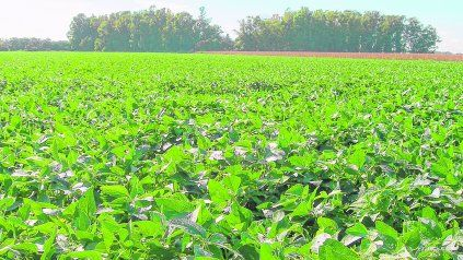 La soja viene perdiendo área y la cadena de la oleaginosa busca revertir la situación.