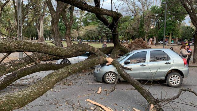 Tuvimos un Dios aparte, dijo la conductora del auto sobre el que cayó un árbol