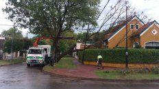 En Castagnino 390, en la zona norte de la ciudad, un ejemplar añoso se desplomó sobre el jardín de una casa,