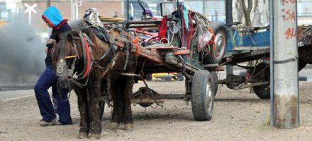 El concejal Rivero quiere reglamentar la actividad de los carros tirados por caballos