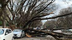 Por el viento, un árbol cayó sobre dos autos y se voló la bandera más alta de la ciudad