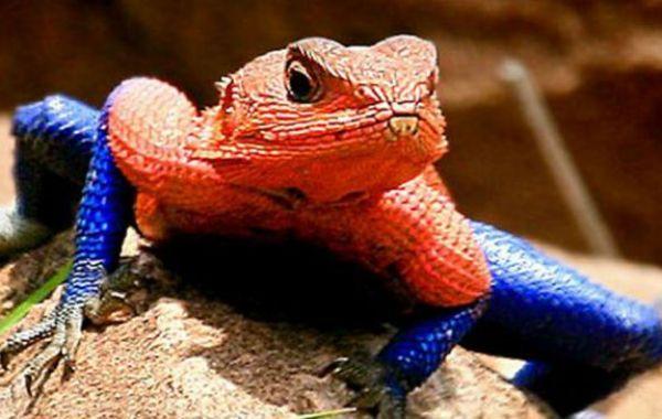 La especie habita en un parque nacional de Kenia.