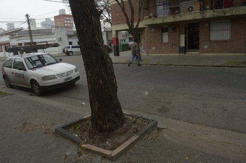 bajo la llovizna. Hasta este árbol de Colón y La Paz  trasladó la víctima sus ahorros