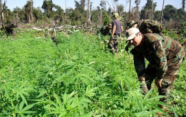 Cannabis. Un cuartel uruguayo.