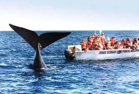 Cuando se acercan las ballenas a la embarcación comienzan a sonar los flashes para registrar este momento inolvidable.