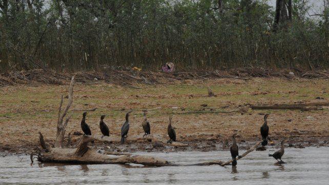 Construyen un refugio para las aves que huyen de los incendios en las islas