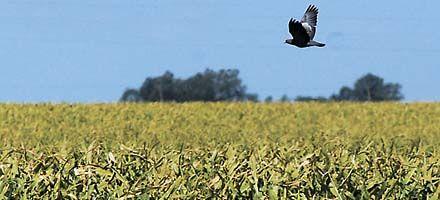 Las compensaciones a los granos dividen aguas