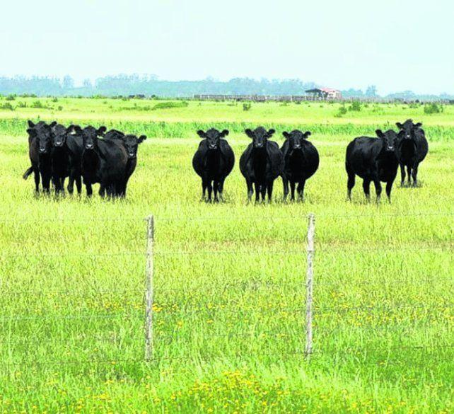 pastoreo. La ganadería bajo este método mitiga el efecto invernadero.