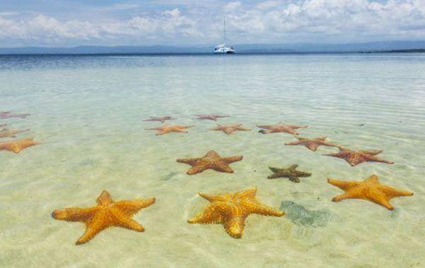 Ejemplares. Las estrellas son consideradas clave para el ecosistema costero. Comen mejillones y caracoles de mar.