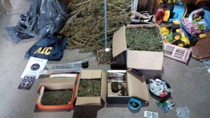 Desmantelaron una pyme de cannabis en un domicilio de zona norte