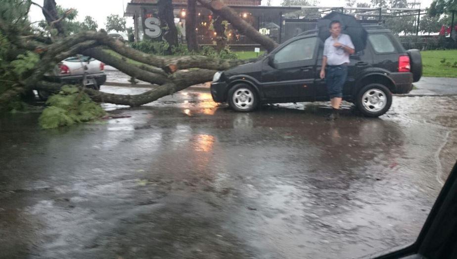 En Oroño  y Wheelwright  un auto quedó debajo de la rama de un árbol de gran porte. (Foto: Roque García)