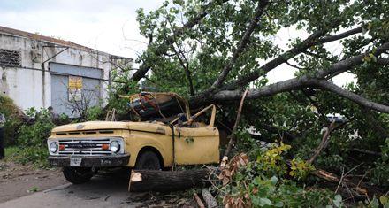 El municipio reiteró que no había denuncias para sacar el árbol que causó una muerte