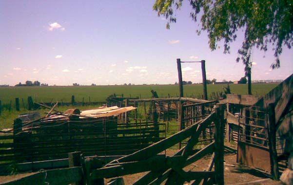 Escena del delito. El campo de la localidad de Sanford de donde fueron sustraídos los animales.