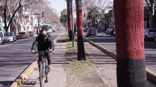 Las palmeras de avenida Godoy