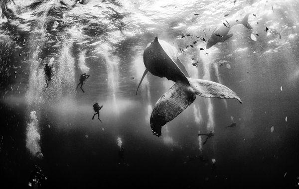La ganadora: Whale Whisperers. (Anuar Patjane Floriuk / National Geographic Traveler Photo Contest)