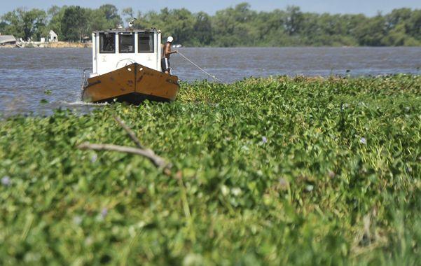 Peligros. El río se llenó de camalotes y alimañas con la crecida de los últimos días. (foto: Virginia Benedetto)