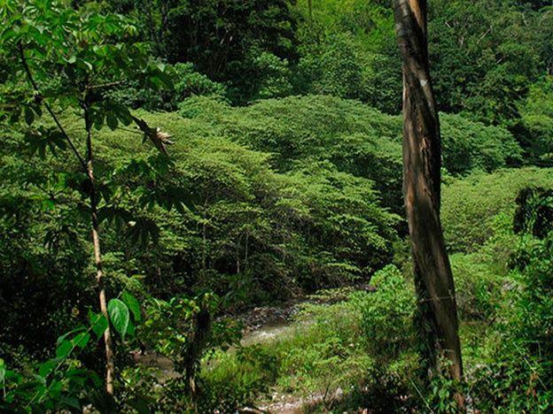 Hallaron una mítica y misteriosa urbe perdida en la selva